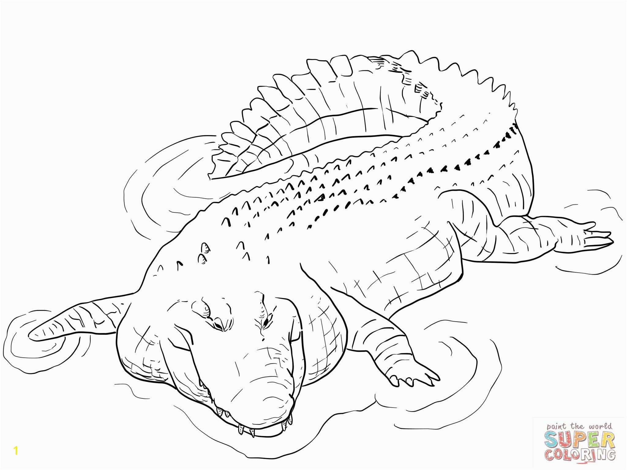 Alligator Coloring Pages Indo Pacific Saltwater Crocodile Coloring Page Alligator Coloring
