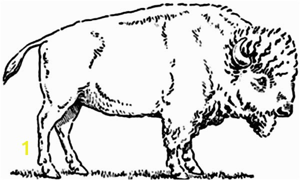 Bison Coloring Pages Bison Picture Coloring Page
