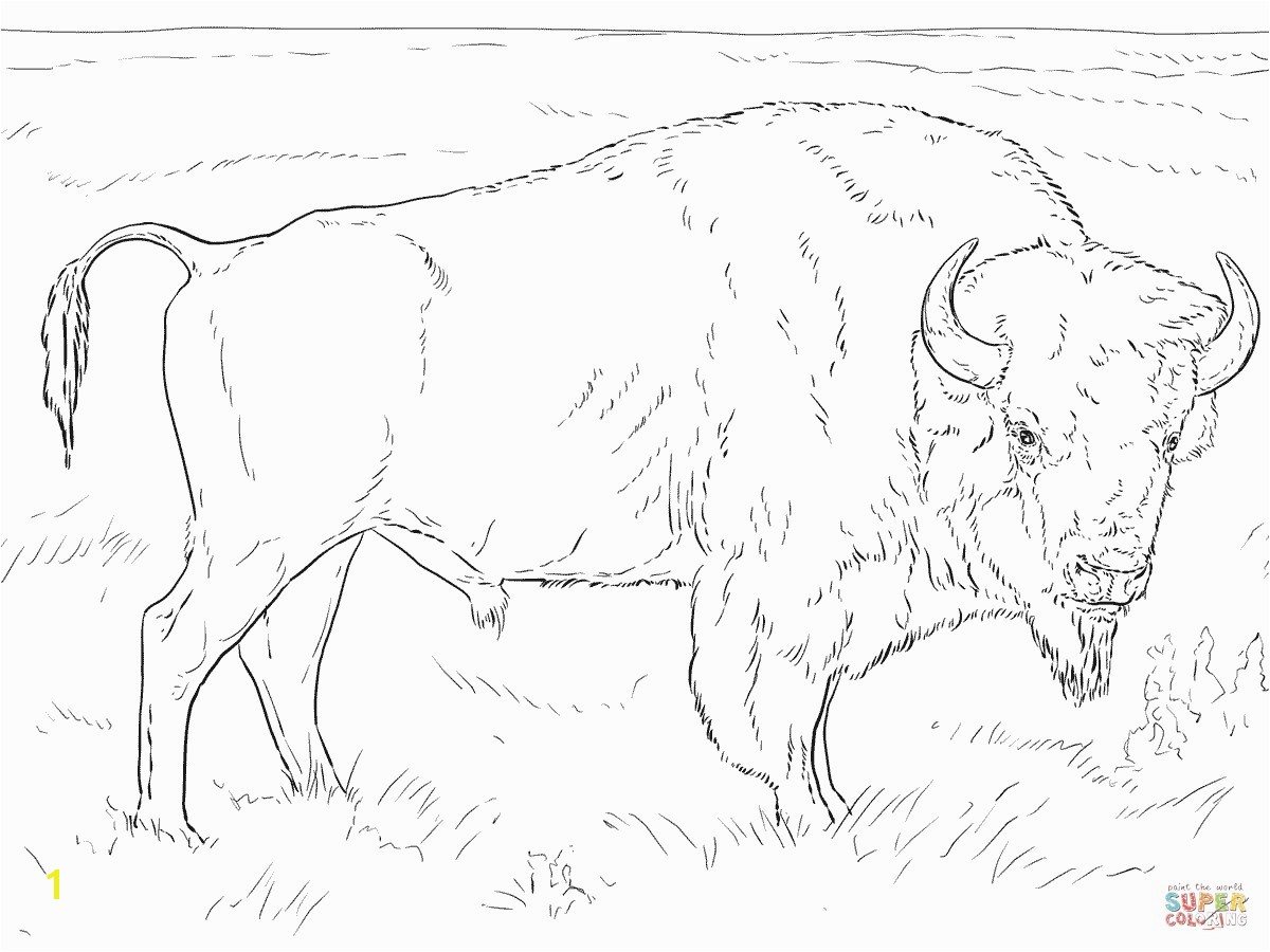 Realistic American Bison Coloring Page Buffalo
