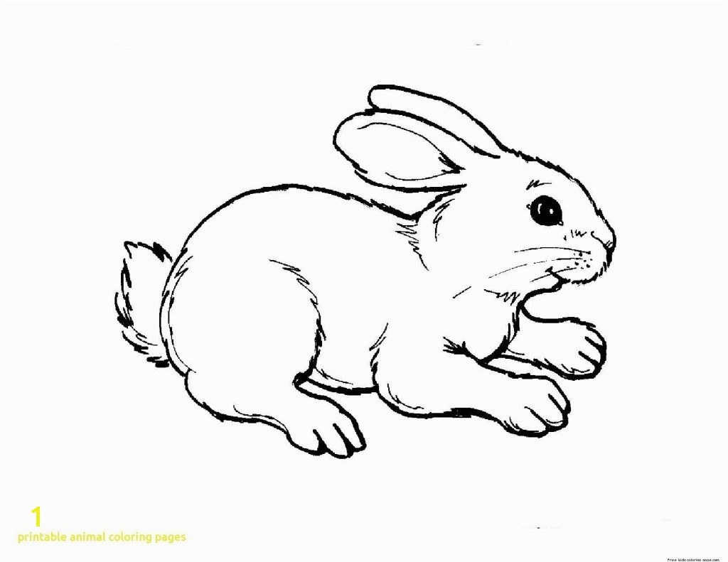 Opportunities Animal Coloring Pages Printable Animals 8305 1650 1275