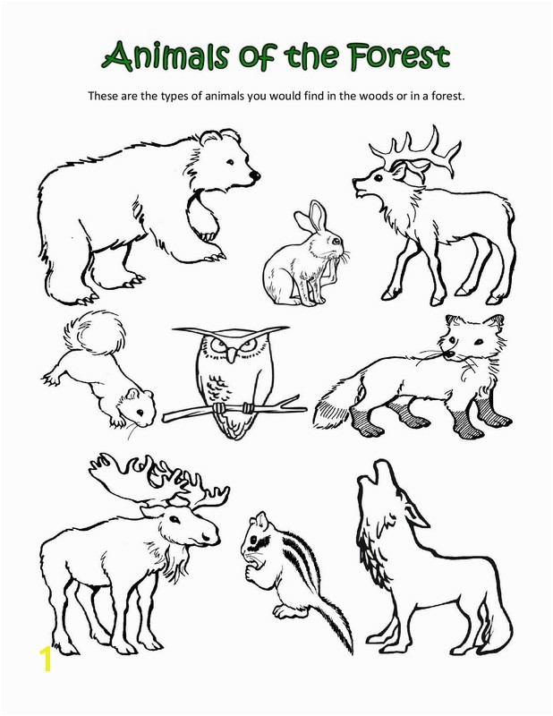 Arctic Animals Colouring Pages Polar Animals Coloring Pages Bell Rehwoldt