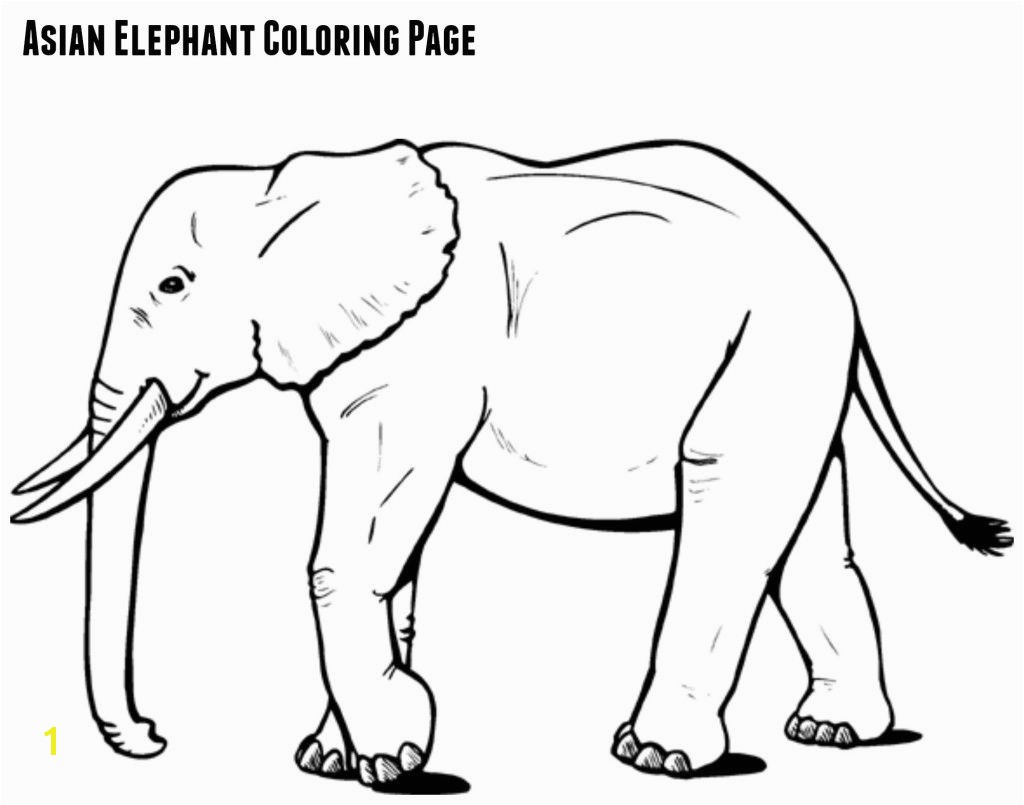 Asian Elephant Coloring Page asian Elephant Coloring Page Jenny at Dapperhouse