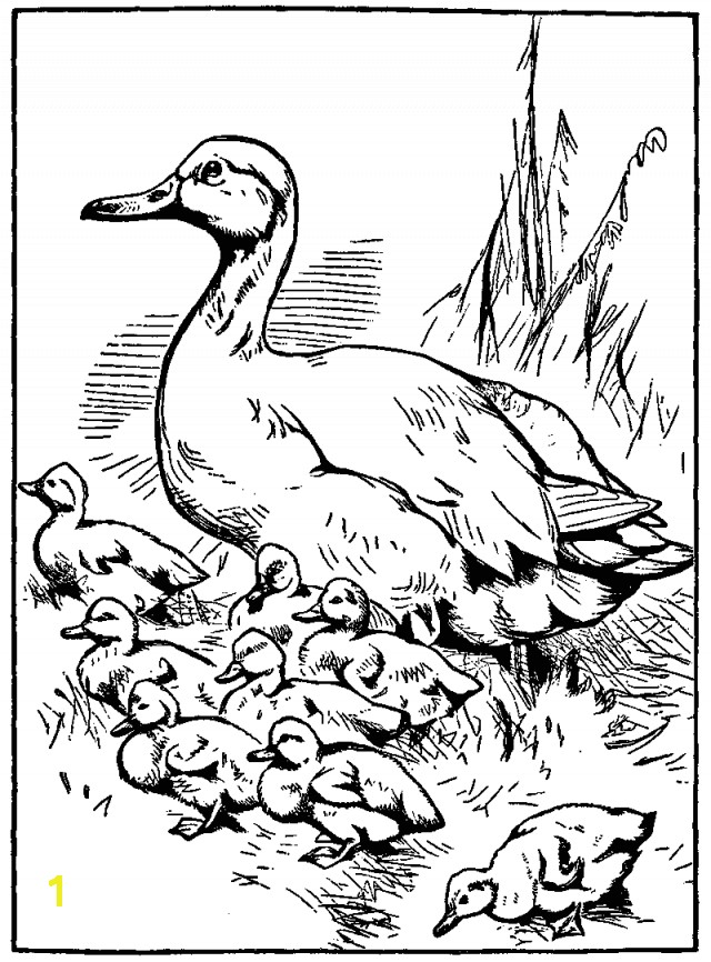 Printable mother duck and baby ducklings coloring page