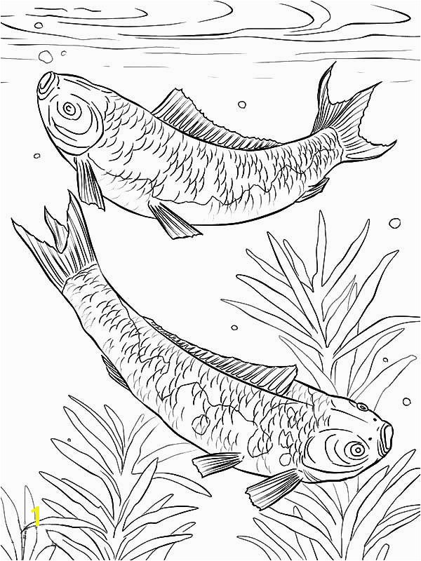 Fish Coloring Pages for Adults Awesome Betta Fish Coloring Pages Awesome Ffnsx7yi4iwutv6 Rect2100h Vases