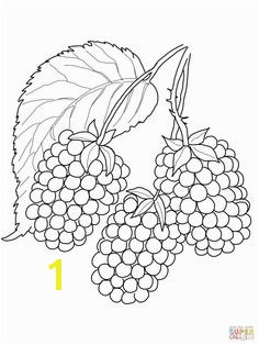 Blackberry coloring page from Blackberry category Select from printable crafts of cartoons nature animals Bible and many more