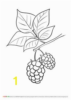 5d8b2c e5817a4359e192ebb24a free printable coloring pages berries