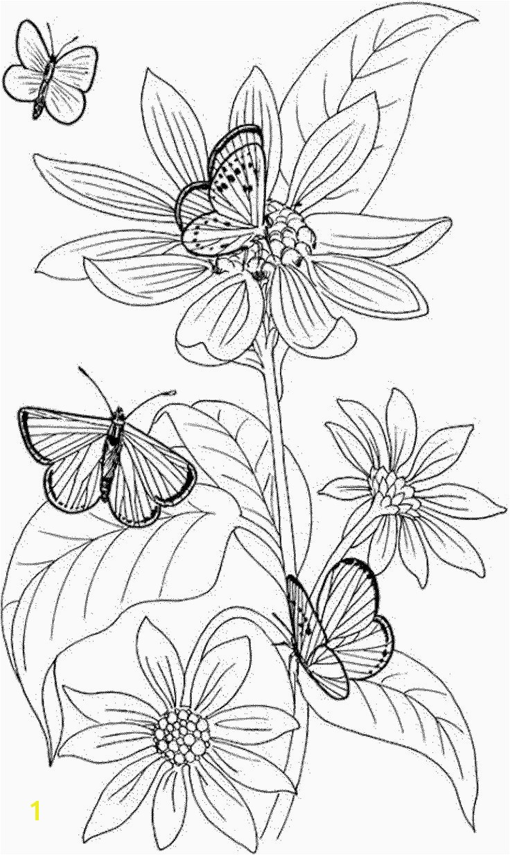 Butterflies Coloring Pages Butterfly Coloring Pages Unique Crayola Pages 0d Archives Se