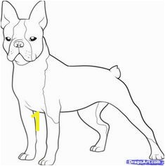 Boston Terrier Coloring Page Bostons 3 Pinterest