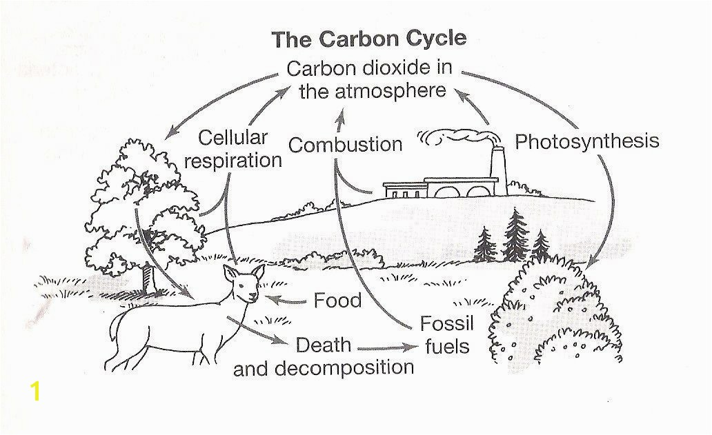 Carbon Cycle Coloring Page Best Teaching Image Luxury graph