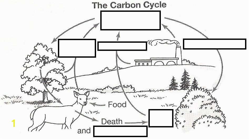 wizer free interactive carbon cycle Biology cycles blended worksheet The Carbon Cycle by teacher