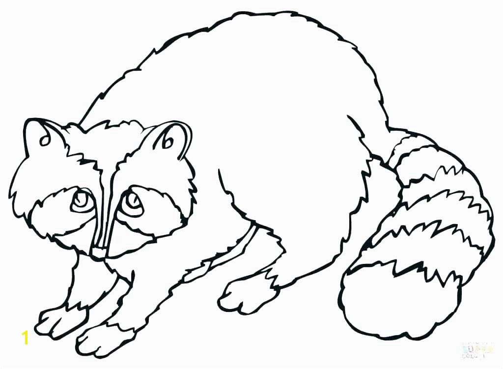 raccoon coloring sheet raccoon coloring page raccoon coloring page raccoon coloring pages cute raccoon coloring page raccoon coloring sheet