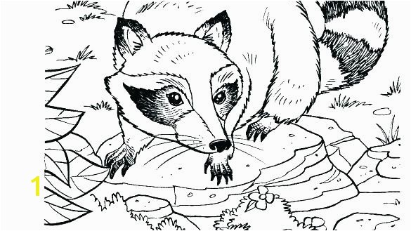 raccoon coloring sheet raccoon and the big bad bully coloring pages raccoon coloring page the kissing
