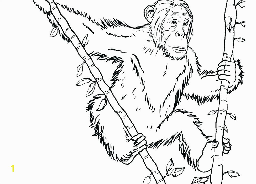 chimp coloring pages chimpanzee coloring page large size of cartoon chimpanzee coloring pages printable page free