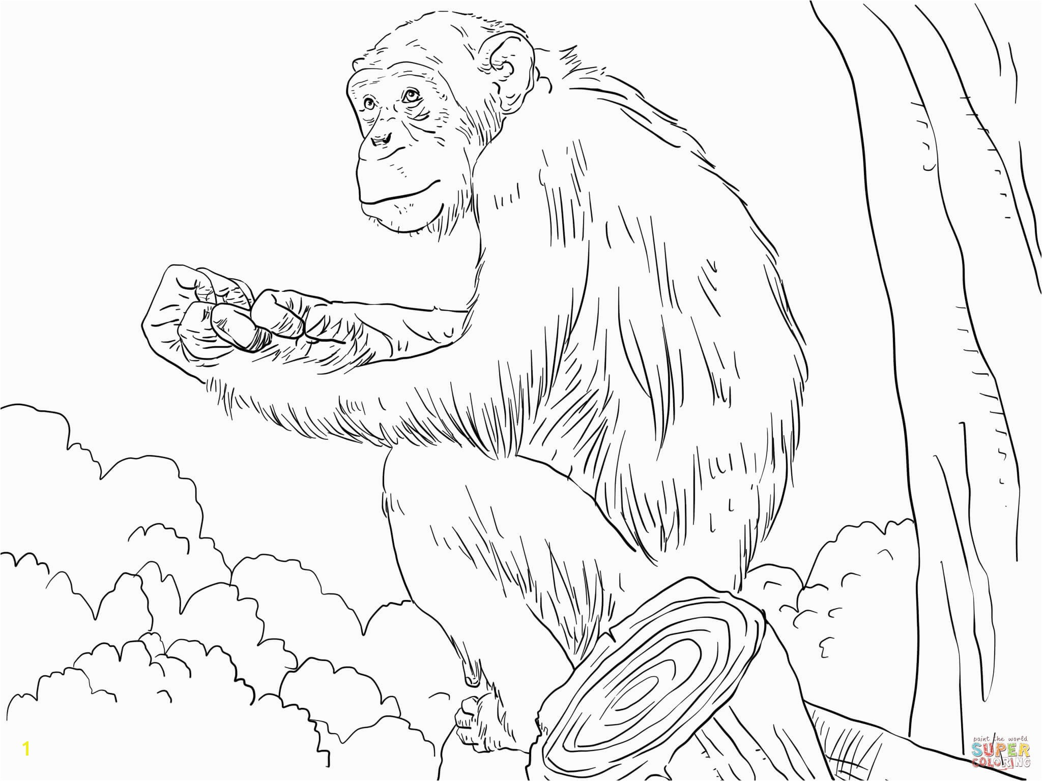 mon Chimpanzee