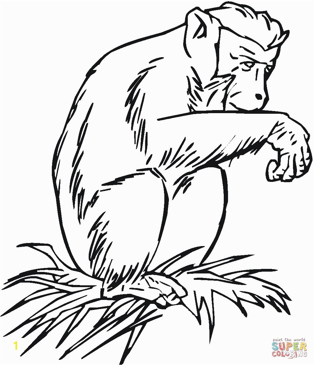 Chimpanzee The Grass