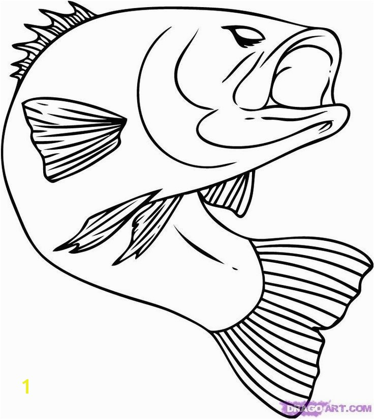 Chinook Salmon Coloring Page Awesome 109 Best Line Drawings for Literacy Pinterest 20
