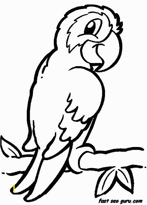jungle bird parrot coloring pages printable for kids