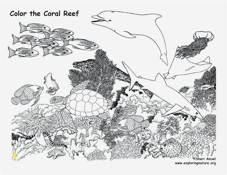 Coral Reef Animals and Plants Coloring Pages Awesome Coral Reef Coloring Pages Coral Reef Fish Coloring
