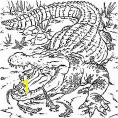 Coloring Pages Krokodil Dessin crocodiles a colorier