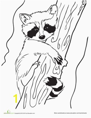 "Baby Raccoon Coloring Page Raa ""ر"" raccoon raccoon راكون"