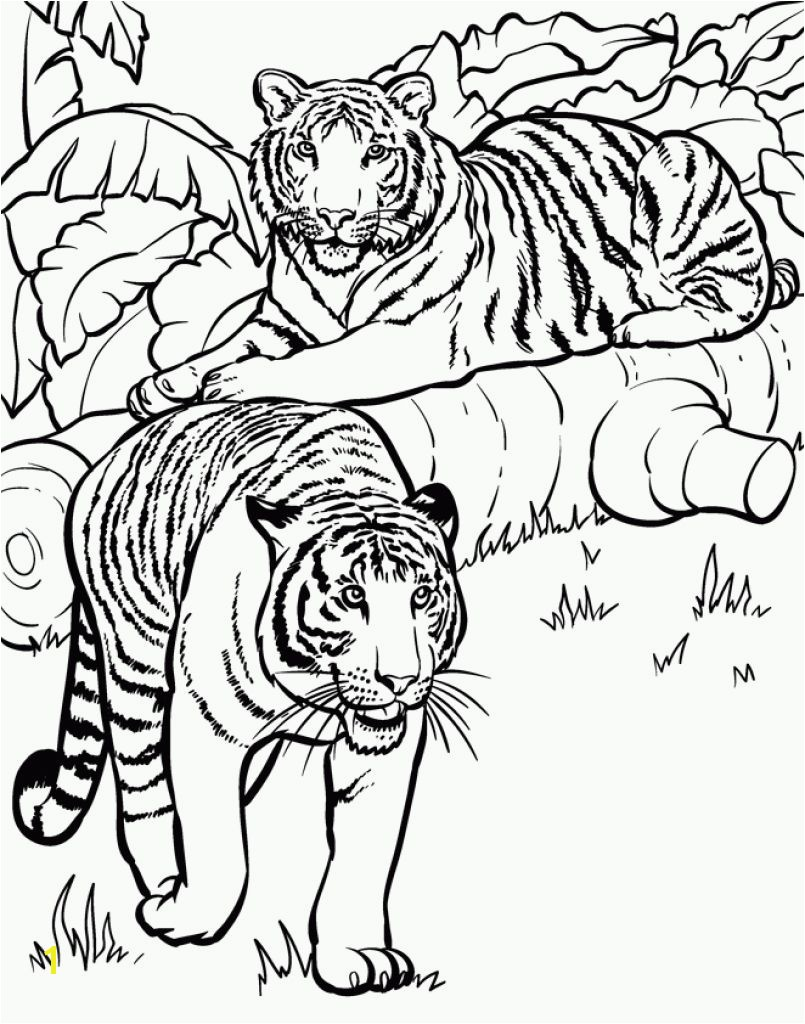 Realistic And Detailed Coloring Page Tiger For Older Kids