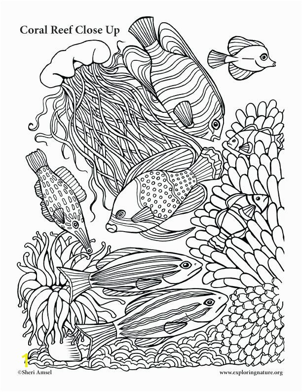 Best Coral Reef Coloring Page More Image Ideas