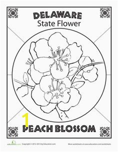 Do you know the official flowers of every state Get started with Delaware and its