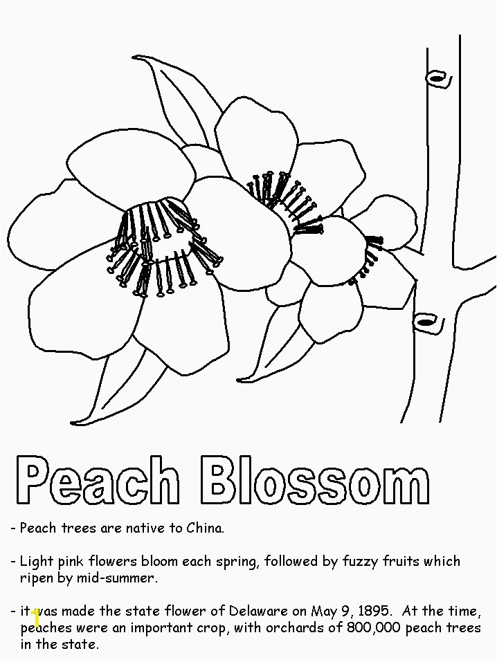 Delaware State Flower Coloring Page State Birds Coloring Pages Delaware State Flower Coloring Page Fresh