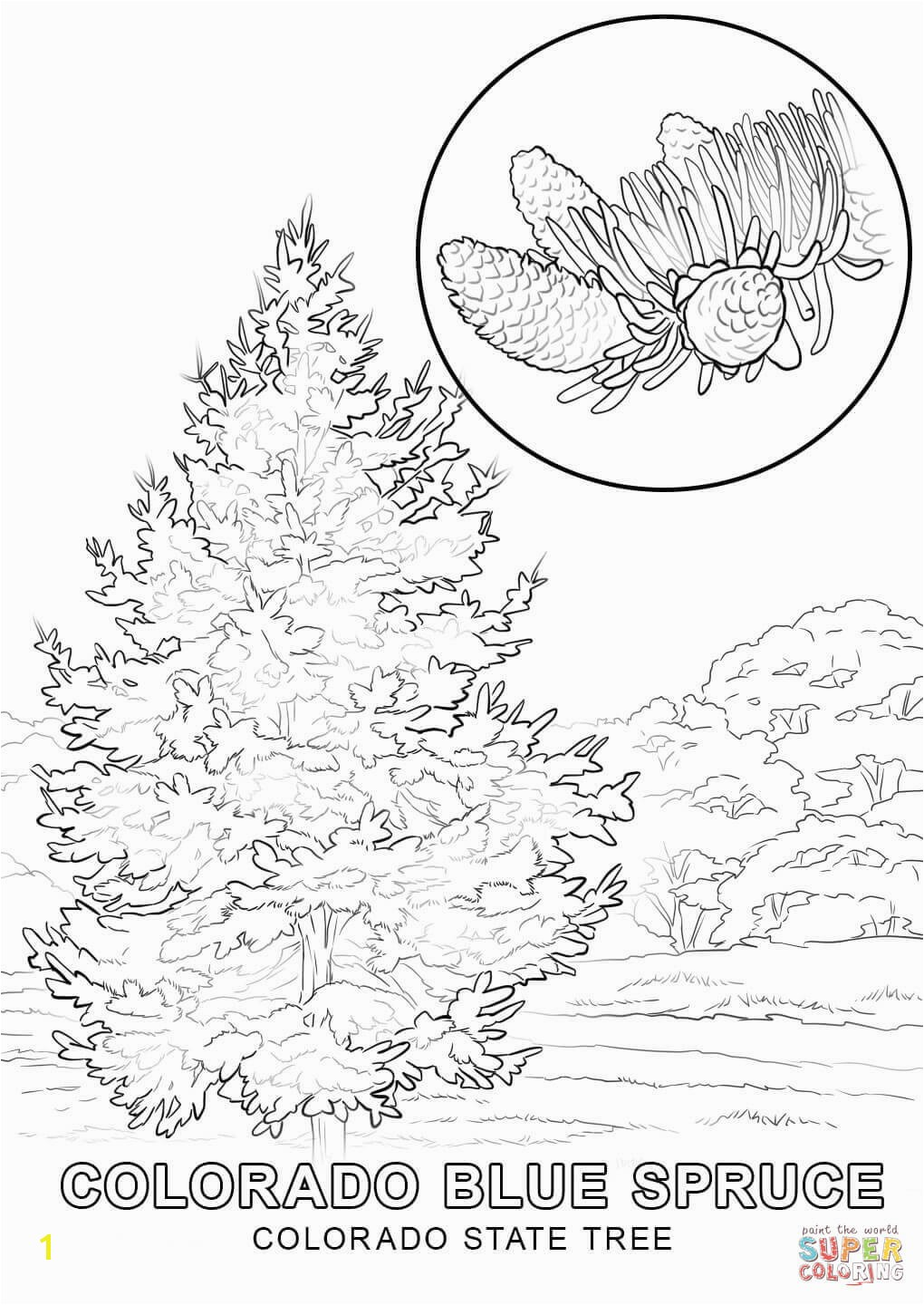 Delaware State Flower Coloring Page States Coloring Pages Colorado State Tree Page Free Printable Best