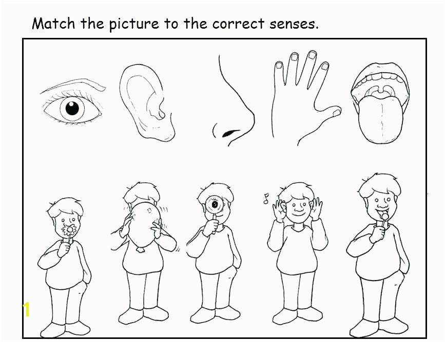 Five Senses Coloring Pages New 40 Beautiful 5 Senses Coloring Pages for Preschoolers Five Senses