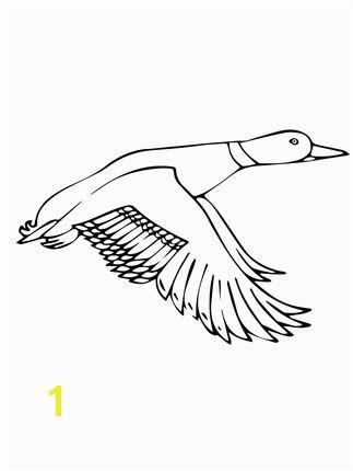 ducksdrawings