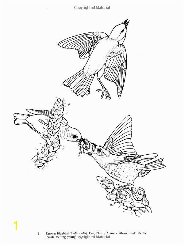 10 New Bird Coloring Pages Ideas Coloring Pages Birds