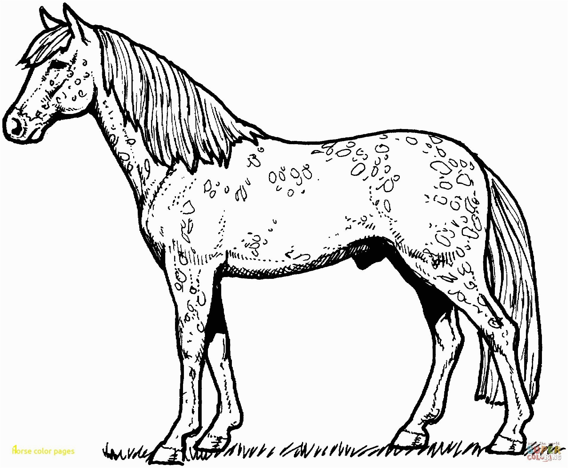 free printable horse coloring pages Horse Color Pages With Horses Coloring Pages Free Printable