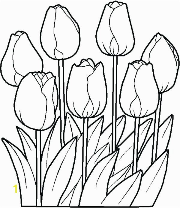 tulips coloring pages free e tulip coloring pages tulips of free printable tulips coloring pages