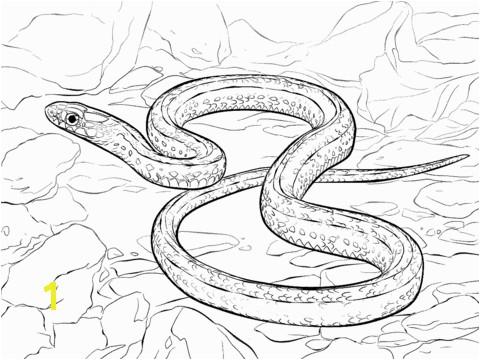Garter Snake Coloring Page Plains Drawing at Getdrawings