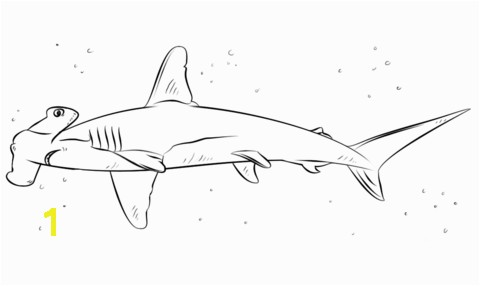 dazzling shark printable coloring pages sharks free printable