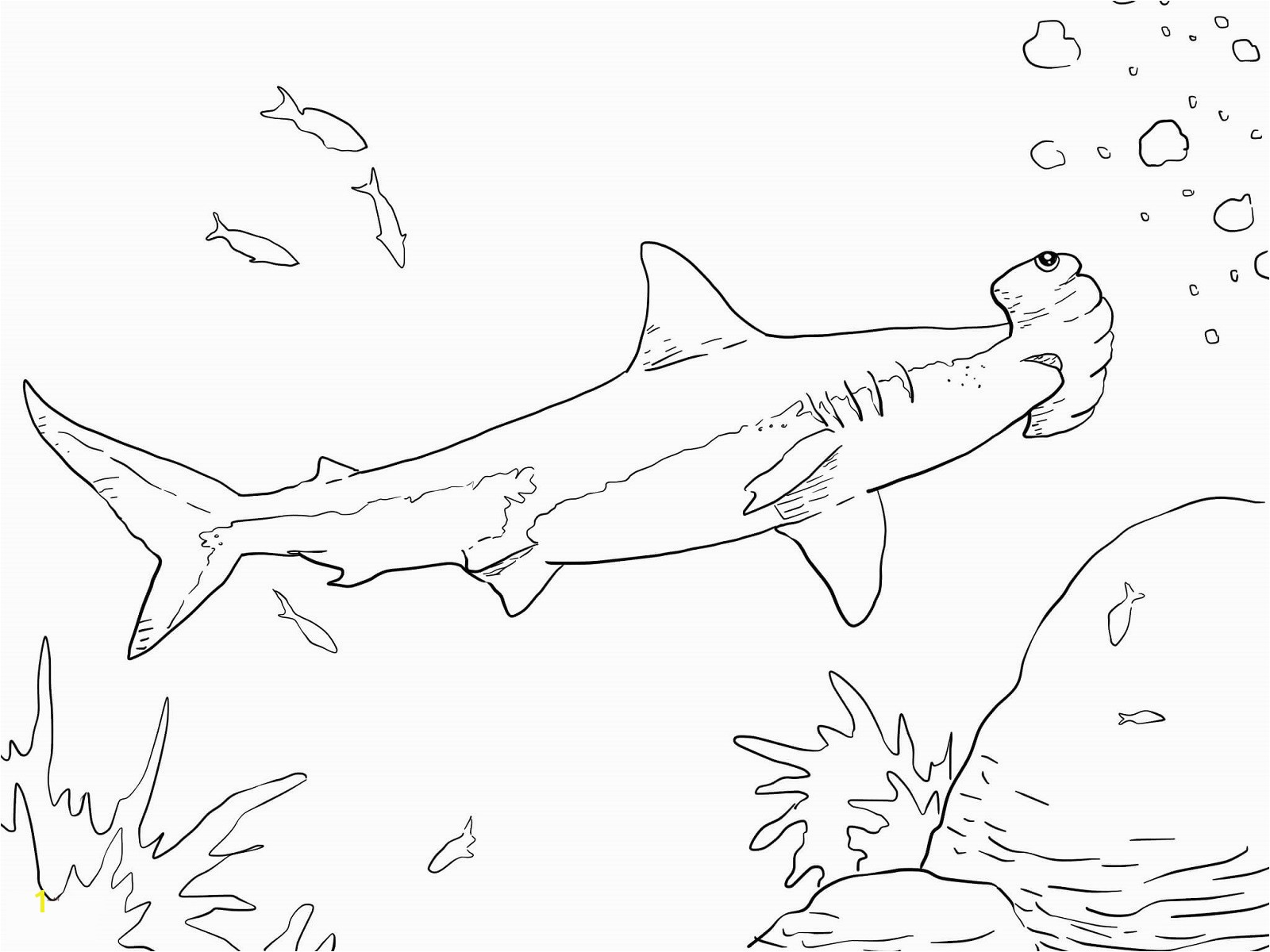 Wonderful Hammerhead Shark Color 17 Fresh Coloring Page Voterapp