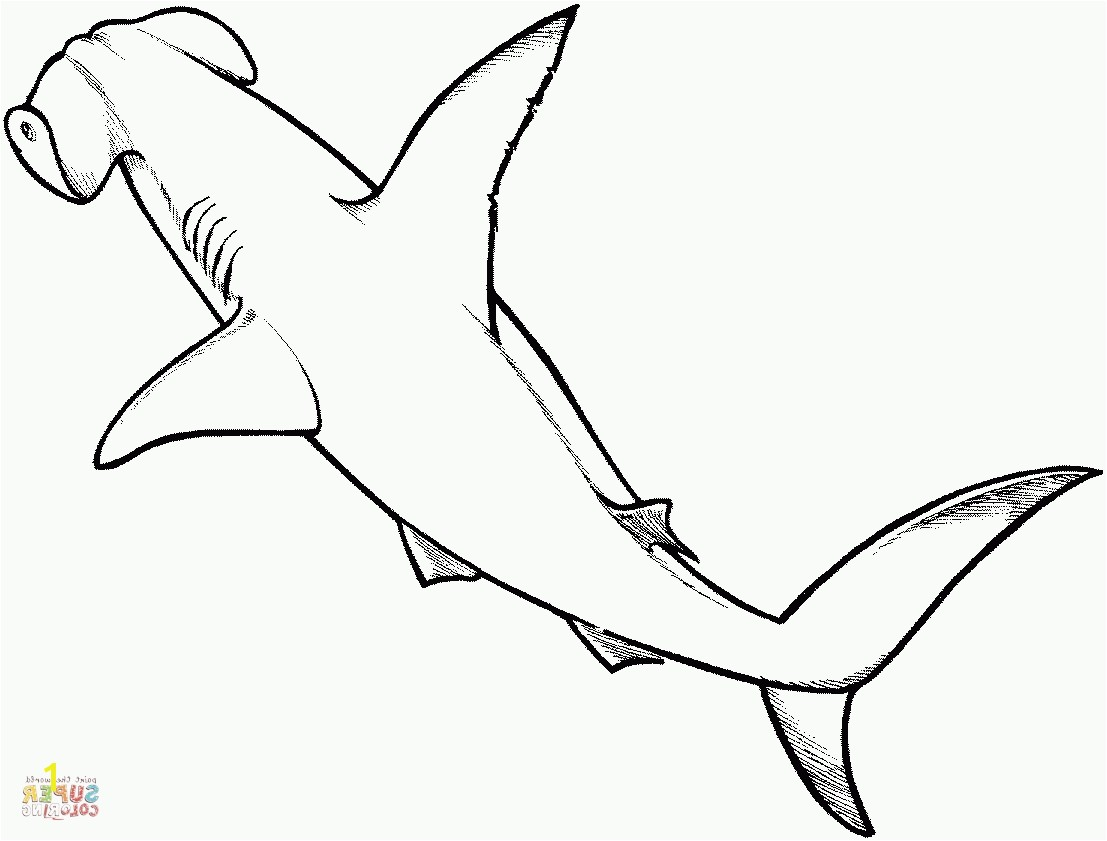 Pages Hammerhead Shark Coloring S Free