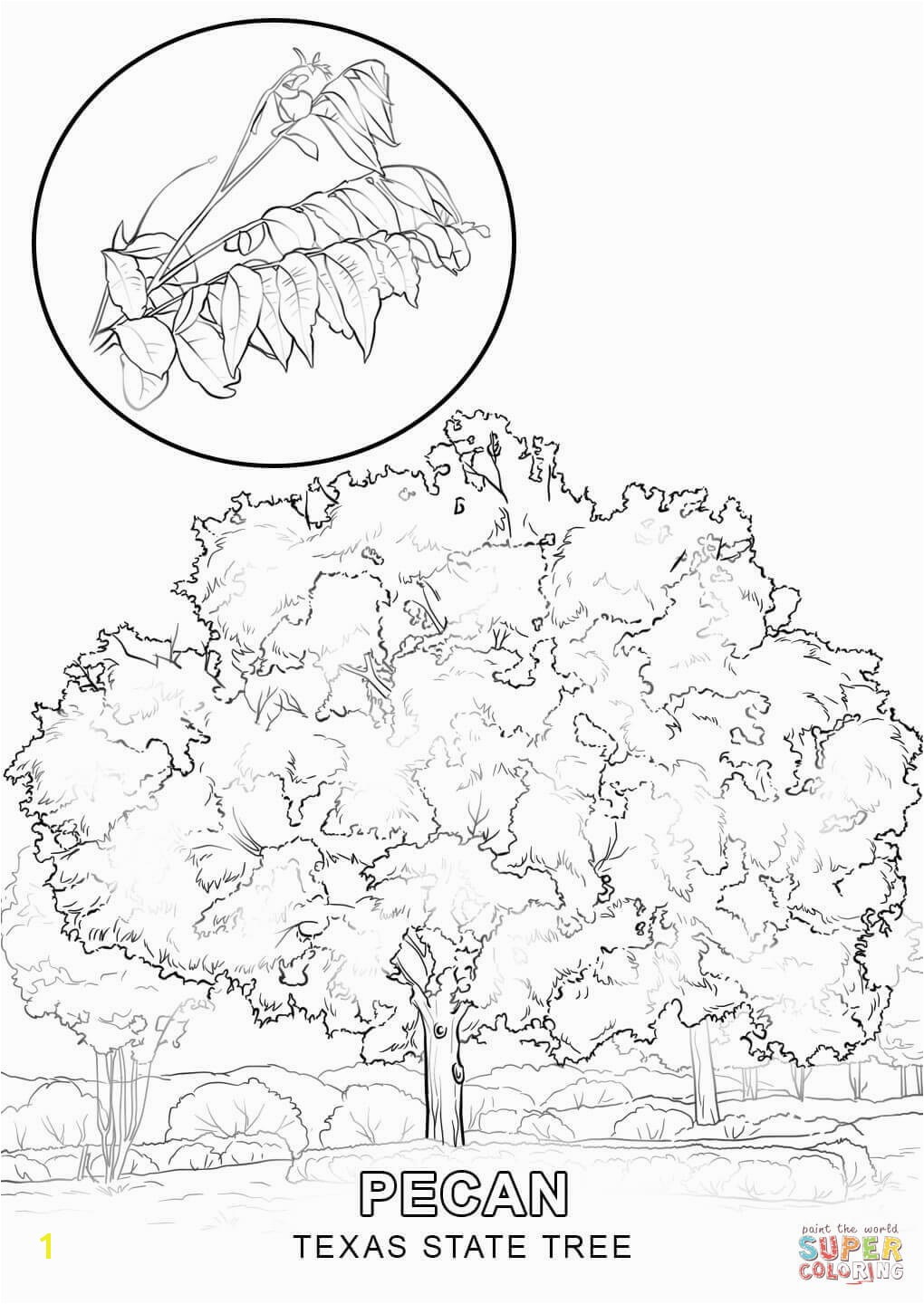1020x1440 Coloring Pages Coloring Pages Draw A Tree Coloring Pages Draw A