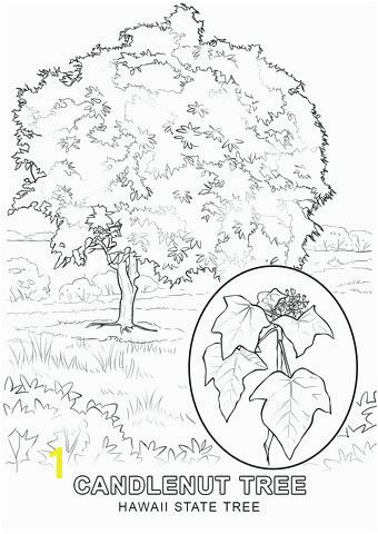 hawaii flag coloring page state tree coloring page hawaiian state flag coloring page