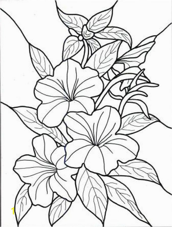 Hawaii Coloring Pages Elegant 369 Best Coloring Pages Pinterest Hawaii Coloring Pages New