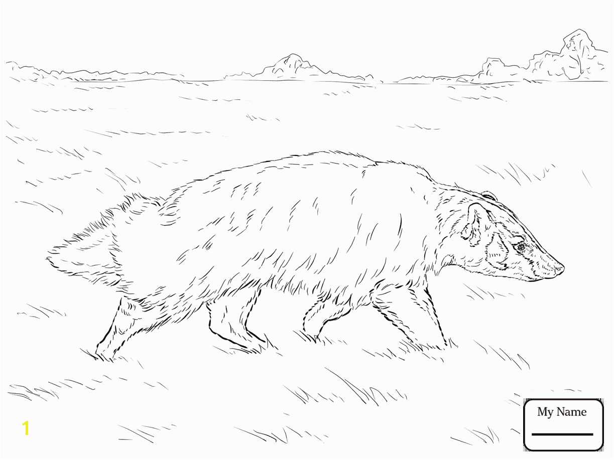 New Honey Badger Coloring Page Drawing At GetDrawings Free For Personal Use