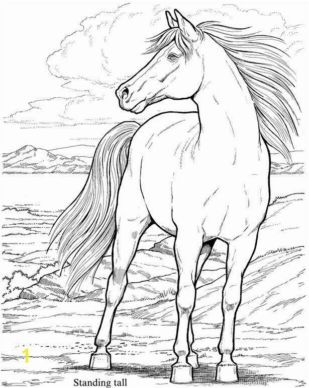Coloring Page Horse 11