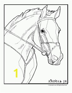 Free Horse To Color