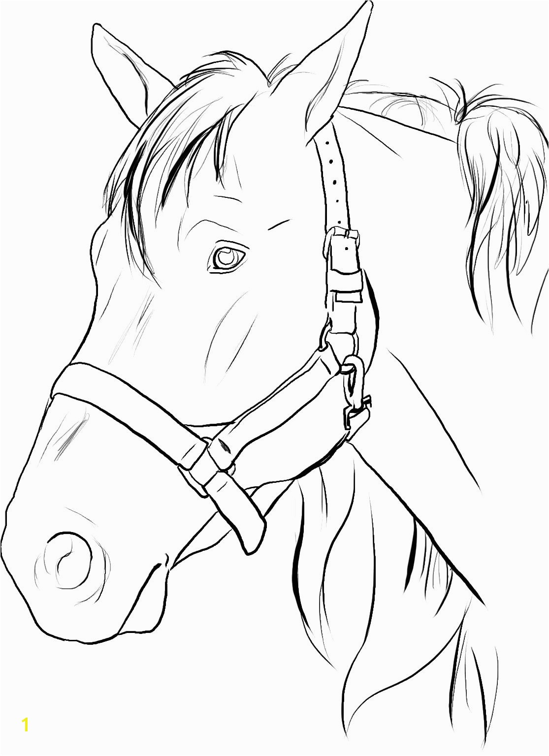 Horse Head Coloring Pages/ Printable Horse Head Coloring Pages to Print Google Search