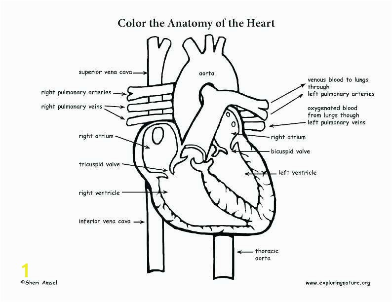 Human Heart Coloring Pages Printable Free Printable Human Anatomy Coloring Pages Inspirational Human