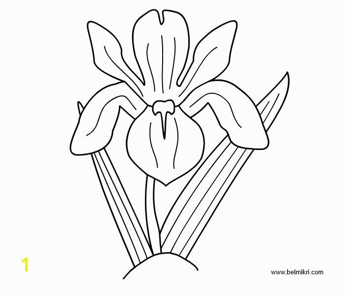 Iris Flower Coloring Page Printable Coloring Pages Dot the Dot