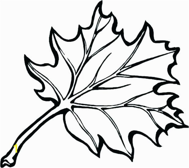 Autumn Leaf Coloring Pages Fall Leaf Coloring Page Draw Fall Leaves Coloring Pages About Remodel Picture Page With Free Big Free Printable Fall Leaves