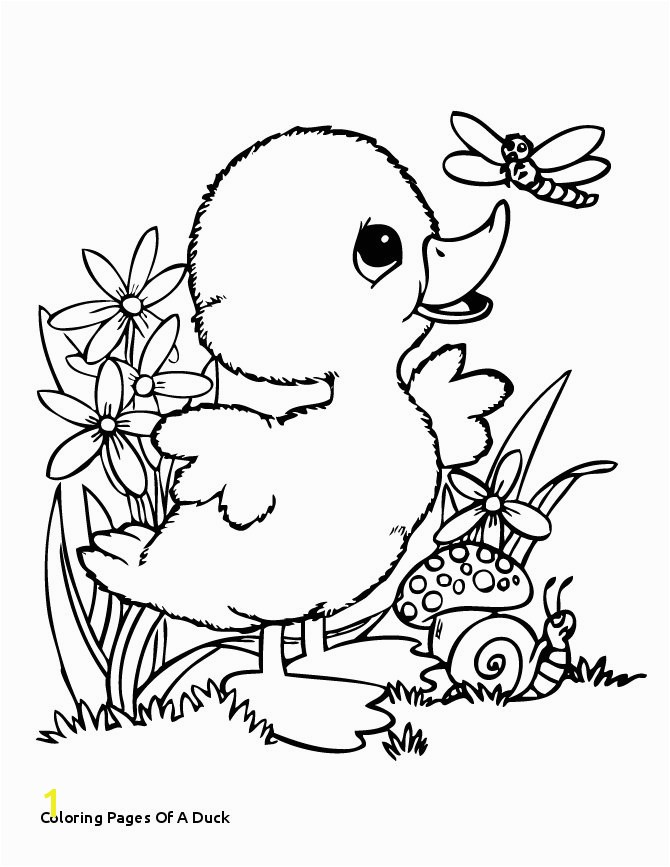 30 Coloring Pages A Duck