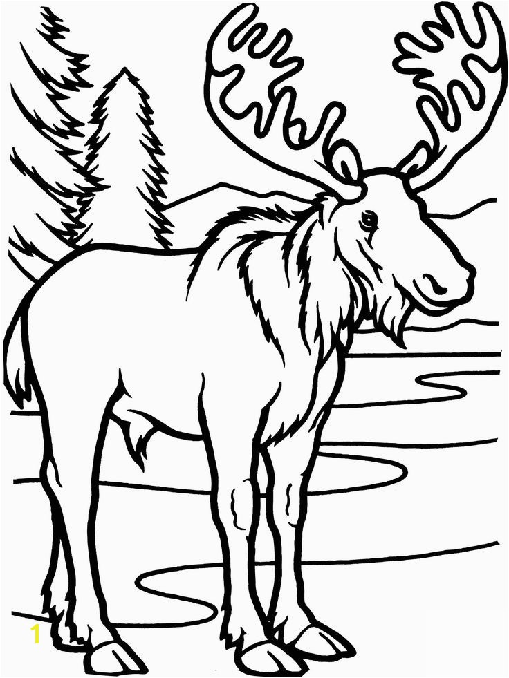 Moose Coloring Pages 1401 Best Color Page Pinterest